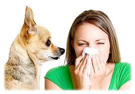 Психосоматика аллергии у взрослых на пыльцу березы