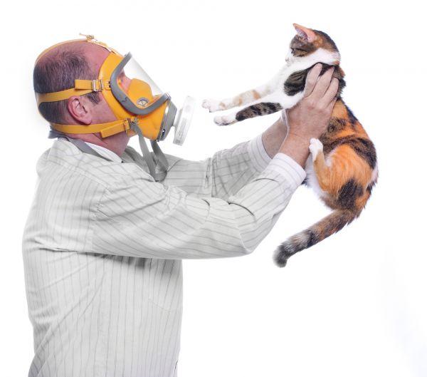 Аллергия на кошек: питомец в радость