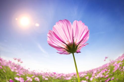 Солнце - настоящее благо для всего живого