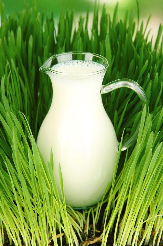 аллергия на белок коровьего молока фото