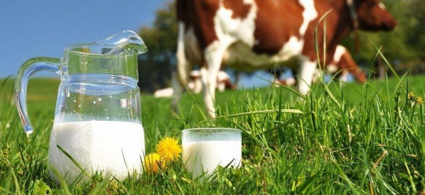 Аллергия на коровье молоко - причины, симптомы, тесты и лечение