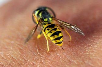 Аллергия на пчелиные укусы